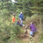 Firmeneinsatz im Nationalpark Harz: Freischneiden von Rettungswegen im Wald
