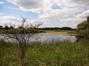 "Blick auf das Projektgebiet ""Alte Elbe Klieken"" © D.Ritzau"