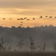 Rambower Moor im Biosphärenreservat Flusslandschaft Elbe Brandenburg- Foto: Damschen