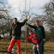 Freiwillige im Nationalpark Kellerwald-Edersee beim Pflanzen alter Obstbaumsorten © Mareike Schulze