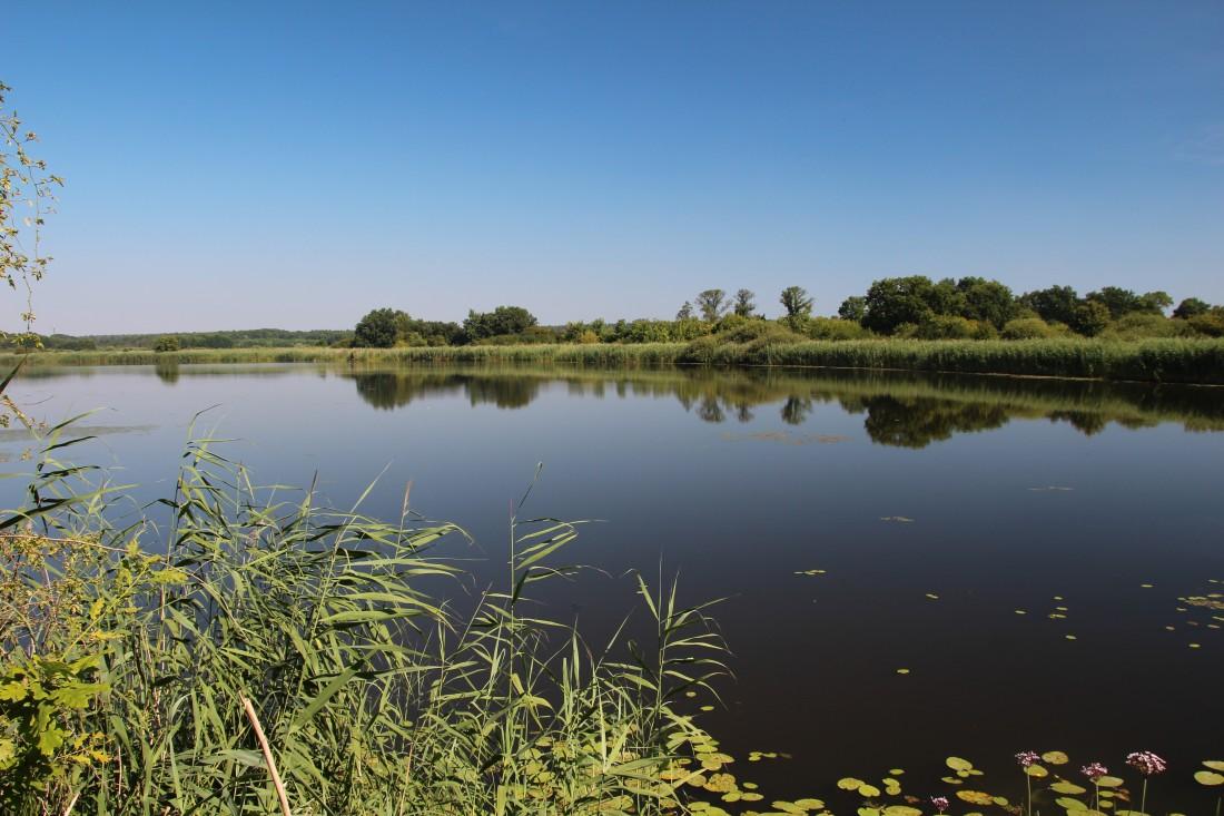 Biosphärenreservat Mittelelbe - Foto: Bernd Eichhorn