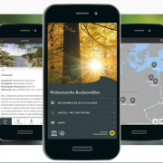 App-Weltnaturerbe Buchenwälder