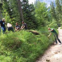 Fünf Personen ziehen Maschendraht aus einem Wald