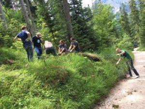 Fünf Personen ziehen Maschenzaun aus einem Wald