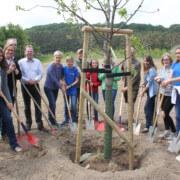 Anlegen einer Streuobstwiese im Biosphärenreservat Südost-Rügen