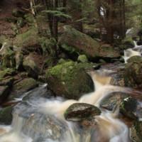 Bach im Nationalpark Harz